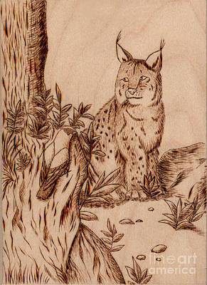 Pyrography Pyrography - Linx by Jeanette K