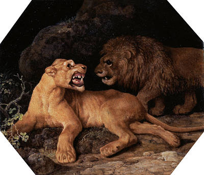 Lion And Lioness Signed And Dated, White Art Print by Litz Collection