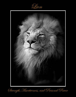 Photograph - Lion Black And White by Marty Maynard