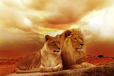 Animals Royalty-Free and Rights-Managed Images - Lion couple without frame by Christine Sponchia