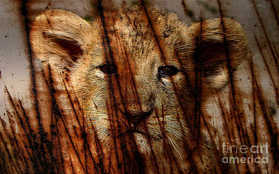 Red Mixed Media - Lion Cub by Marvin Blaine