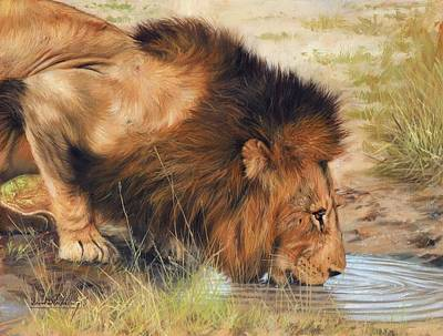 Lion Print by David Stribbling