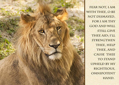 Photograph - Lion Encouragement by Carolyn Marshall