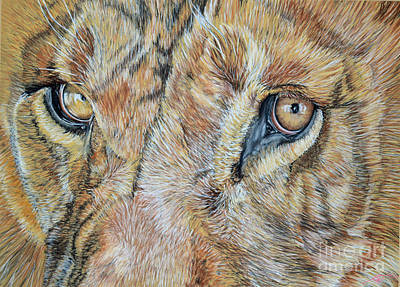 Pastel - Lion Eyes by Ann Marie Chaffin
