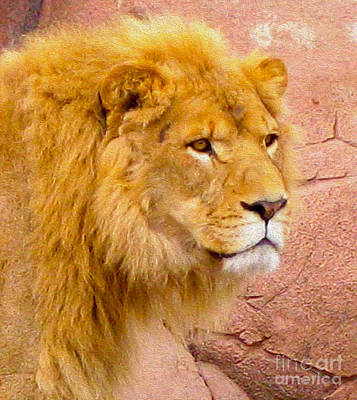 Photograph - Lion Eyes by Nina Silver