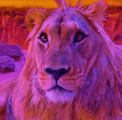 Photograph - Lion Face by Katharina May