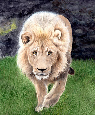 Lion From Woodland Park Zoo Art Print