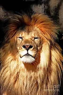 Portret Photograph - Lion by Gene Mark