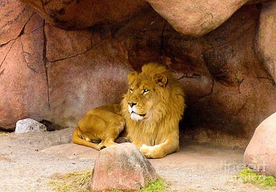 Photograph - Lion In Wait by Nina Silver