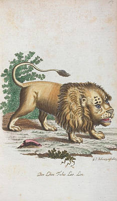 1757 Painting - Lion by Celestial Images