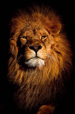 Amador Photograph - Lion King by Amador Esquiu Marques