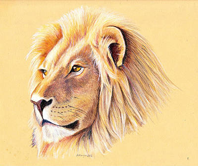 Drawing - Lion by Mary Mayes