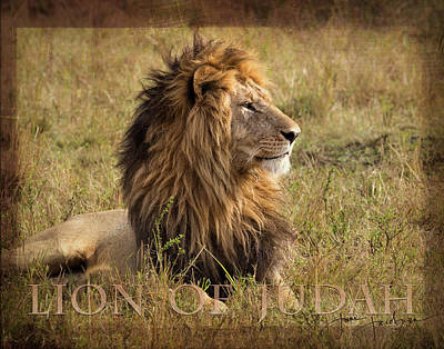 Photograph - Lion Of Judah by June Jacobsen