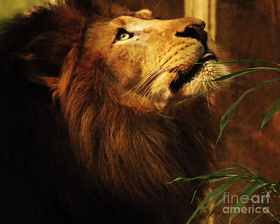 The Lion Of Judah Art Print by Olivia Hardwicke