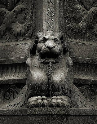 Photograph - Lion by Rick Mosher