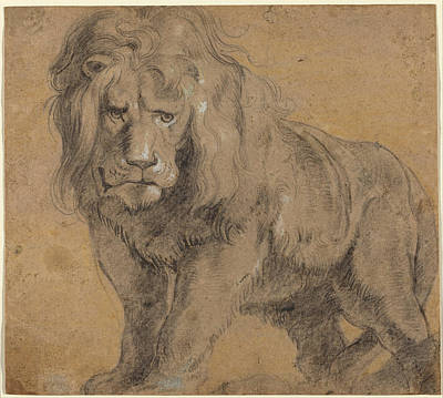 Lion Sketch Art Print by Paul Ruebens