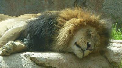 Soap Suds - Lion Sleeping Male 1 by Susan Garren
