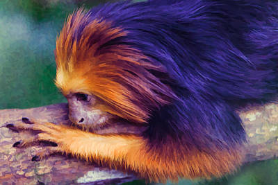 Digital Art - Lion Tamarin by Ray Shiu