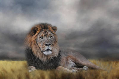 Photograph - Lion Waiting For The Storm by Jai Johnson