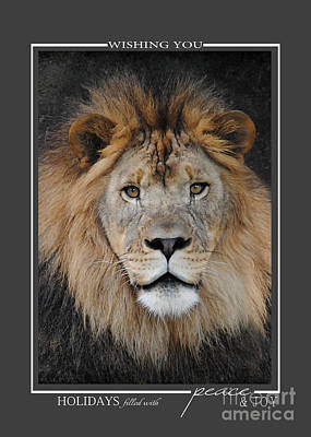 Photograph - Lion Wildlife Christmas Cards by Jai Johnson
