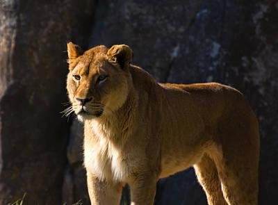 Framed Art Digital Art - Lioness Hunting Position by Chris Flees