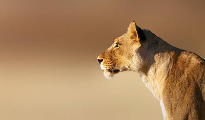 Animals Royalty-Free and Rights-Managed Images - Lioness portrait by Johan Swanepoel