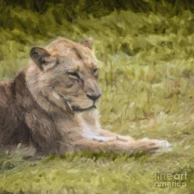 Lion Digital Art - Lioness Resting by Liz Leyden