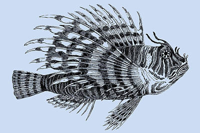 Drawing - Lionfish Blue by Ticky Kennedy LLC
