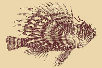 Drawing - Lionfish Brown by Ticky Kennedy LLC