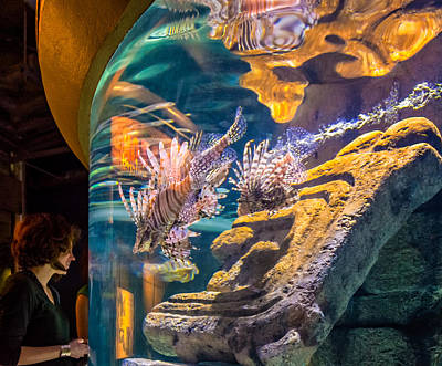 Aquatic Display Photograph - Lionfish Display by Steve Harrington