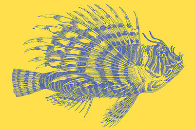 Drawing - Lionfish Yellow by Ticky Kennedy LLC