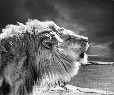 Lions Breath Art Print