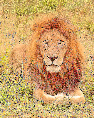 Art Print featuring the photograph Lion's Eyes by Judi Baker