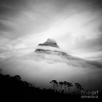 Lions Head Art Print by Neil Overy