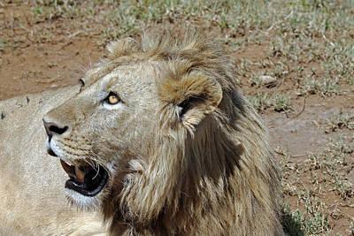Photograph - Lions Head by Tony Murtagh