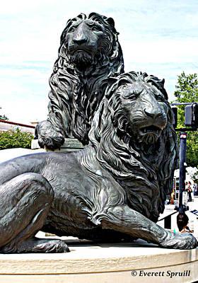 Lions Of Marco Island Art Print