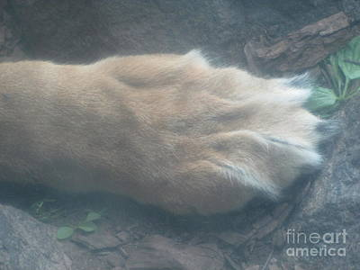 Photograph - Lion's Paw by Barbara Yearty