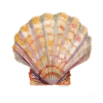 Seashells Painting - Lion's Paw Shell by Amy Kirkpatrick