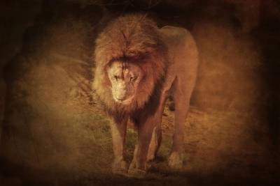 Photograph - Lions Prayer by Emily Stauring