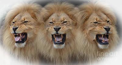 Photograph - Lions Roar by Jim Fitzpatrick