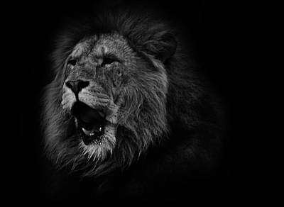 Bigcat Photograph - Lions Roar by Martin Newman