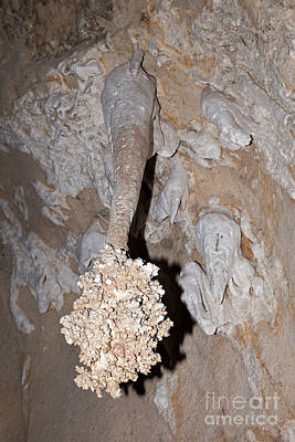 Photograph - Lions Tail Carlsbad Caverns National Park by Fred Stearns