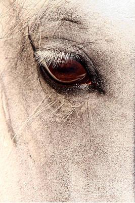 Photograph - Lippizan Stallion by Butch Lombardi