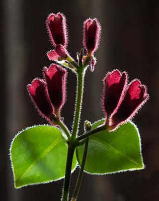 Photograph - Lipstick Flower by Vladimir Kholostykh