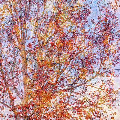 Photograph - Liquidambar Square Abstract by Heidi Smith