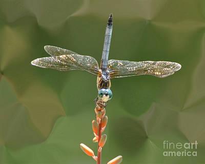 Liquify Dragonfly Art Print