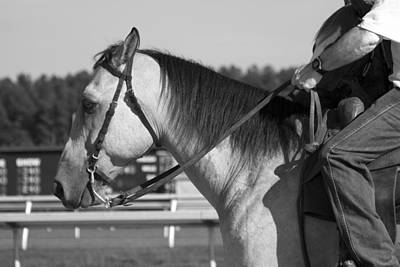 Western Bridle Photograph - Listen by Betsy Knapp