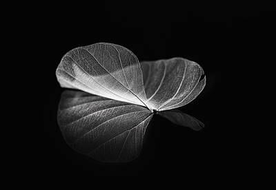 Delicate Photograph - Listen To Your Heart by Judy Tseng