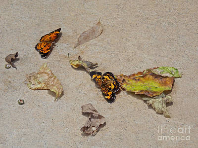 Pearl Crescent Photograph - Litter Bugs by Skip Willits