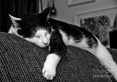 Photograph - Little Ball Of Fur by Cheryl Baxter